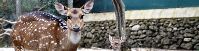 Lloc de Menorca Zoo