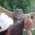 Zoos and wildlife parks 2
